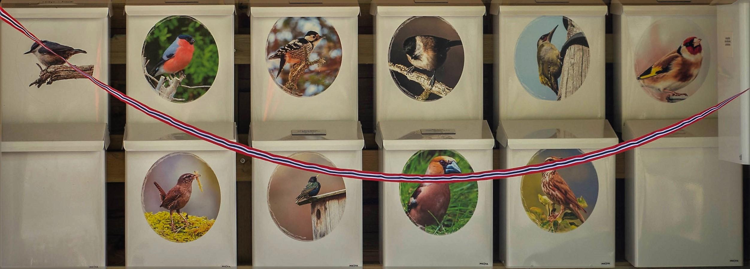 Foto av fuglar tekne i Flisabaken av Anne-Marie Olsen Korhonen. FOTO: Tuomo.